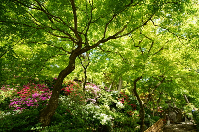 境内には500本以上ものもみじが植えられています。春のつつじの時期は、青もみじとのコントラストがとっても綺麗。日差しによって、同じ緑でもいろいろな表情へと移り変わり訪れる人の目を楽しませてくれます。
