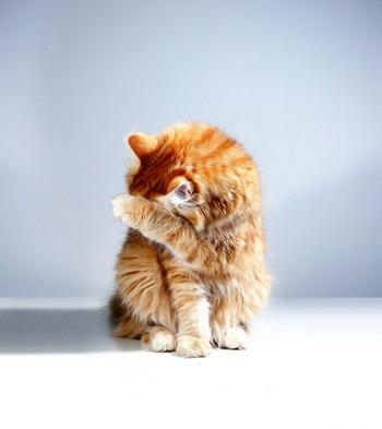 猫ちゃんの身だしなみ?「猫の爪とぎ」心理と対策&おすすめアイテム24選+α
