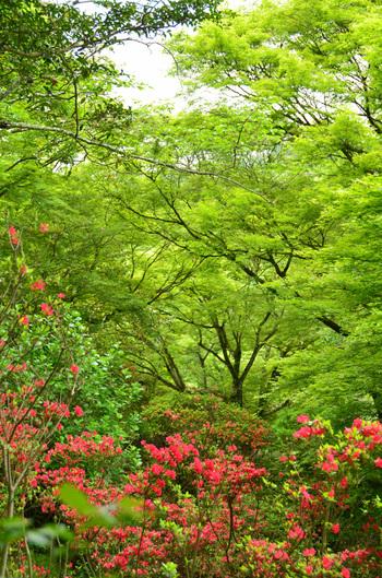 春には桜やツツジ、夏には新緑、秋には紅葉、冬は光のアートなど、四季折々の風景を一年中楽しるのが魅力。どの季節に訪れても美しい風景に出合えます。
