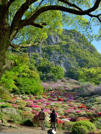 佐賀県武雄市にある「御船山楽園」は、武雄領主・鍋島茂義が3年の歳月をかけて造り上げた池泉回遊式庭園です。15万坪の総面積を誇り、国の指定記念物に登録されています。御船山楽園は御船山の南西麓に位置しており、御船山を借景に美しい景観を楽しめます。