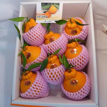 なんだか似ているオレンジやポンカンとの違い、どう食べたらよいかなど、気になりますよね。そこで今回は、「デコポンとは?」というあなたへ、特徴や美味しさ、食べ方をご紹介します。  実は、かなり甘い柑橘で、子供や高齢者からも好かれやすいフルーツ。箱買いしたり、贈答品としてギフトとして贈ったりするのも人気なので、「デコポン」の基本情報をおさえておきましょう。