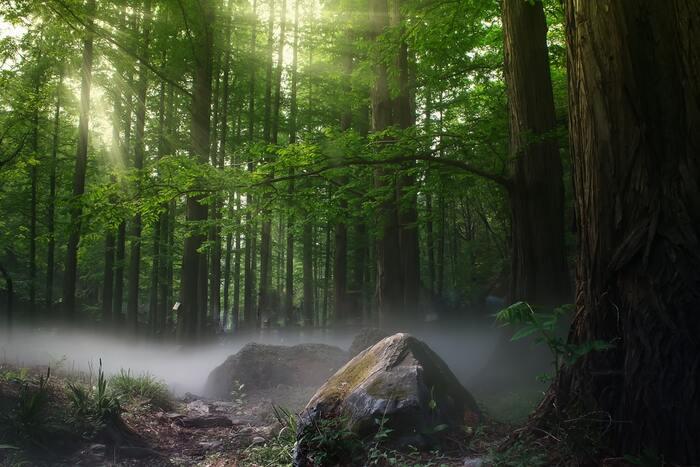 都会の喧騒や人混みにどっぷりと浸かっていると、それだけで心は疲れてしまいます。休日は少し足を伸ばして、自然の多い場所に出かけてみましょう。  樹木の香りを嗅いだり、葉のざわめきを聞いたりすることは高いリラックス効果をもたらしてくれます。水の流れる音も、人をリラックスさせる効果があります。