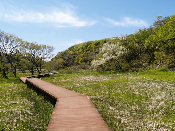 「小網代の森」は、初めにご紹介した「長井海の手公園・ソレイユの丘」よりも、少し海沿いに下ったところにあります。森林、湿地、干潟、海とつながっている珍しい森で、豊かな自然に触れることができます。遊歩道が整備されていて歩きやすいのもうれしいですね。