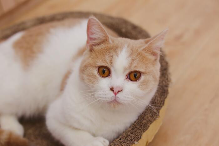 またたびを撒いていないのにやたらとガジガジしてしまう子、いますよね。考えられる理由は大きく2つあります。  ■ストレス 遊び足りなかったり、反対にひとりになれる時間がなかったり、何かしらのストレスを感じている猫ちゃんには「噛みグセ」が出やすいです。ずっと家を空けて構ってあげられていなかったり、猫ちゃんのプライベートを奪ってしまっていないか、心当たりを探ってみてください。  ■歯がかゆい 成長過程の猫ちゃんだと、歯茎がうずいてかゆい思いをしているのです。それを紛らわすためにガジガジしていると考えられます。いずれおさまるかもしれませんが、そのまま噛みグセが付いてしまうこともあるので気にかけてあげましょう。