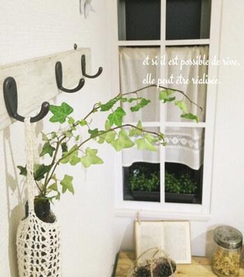 ・室内の場合は直射日光の入る明るい窓辺で管理 ・日影で管理する場合は、週に数回ほど午前中だけ日光浴 ・水耕栽培の場合はなるべく毎日水を取り替える ・生長が早く根詰まりしやすいので、鉢底から根がはみ出ていたら植え替える
