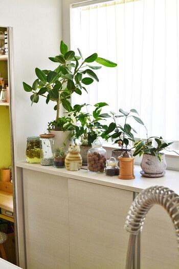 明るいところを好む植物でも、基本的には直射日光は避けましょう。特に真夏の直射日光は葉焼けを起こす原因になるので注意。室内ならカーテン越しの明るい窓際が管理しやすい場所ですよ。