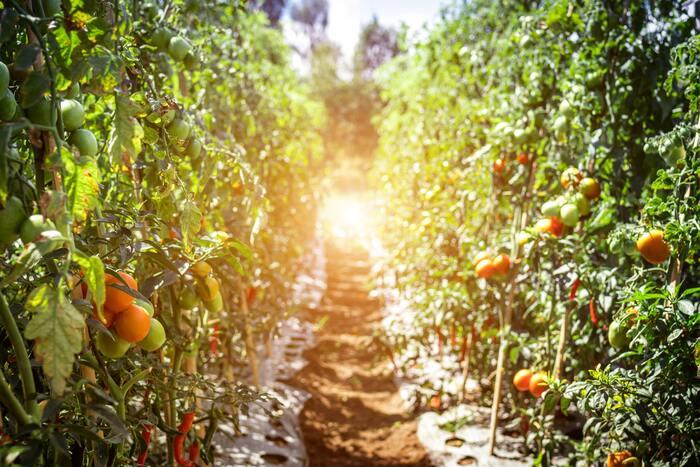 オーガニックの野菜や畜産物を作るということは、それに関わるものもすべて有機的なものを使うことになります。とても手間と時間がかかりますが、自然に重きを置いた好循環が生まれ、広がっていきます。