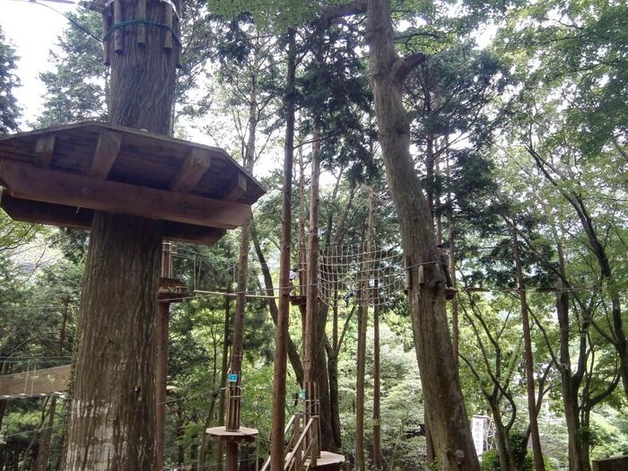 箱根の森の中に広がる「フォレストアドベンチャー・箱根」は、大自然を思いっきり体感できる場所。参加者はハーネスを装着し、セーフティブリーフィング(安全講習)を受けてから行う本格アスレチックなんです。身長140cm以上か4年生の小学生以上なら参加することができます。