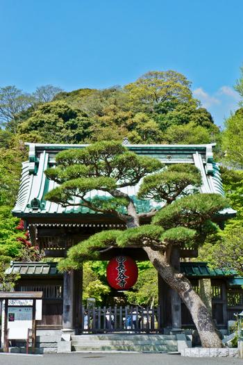 鎌倉ならではの古き良きスポット散策などを楽しみつつ、開放的な空間で美味しいパワーチャージをする・・・とっておきのリフレッシュを、この鎌倉エリアで満喫してくださいね。