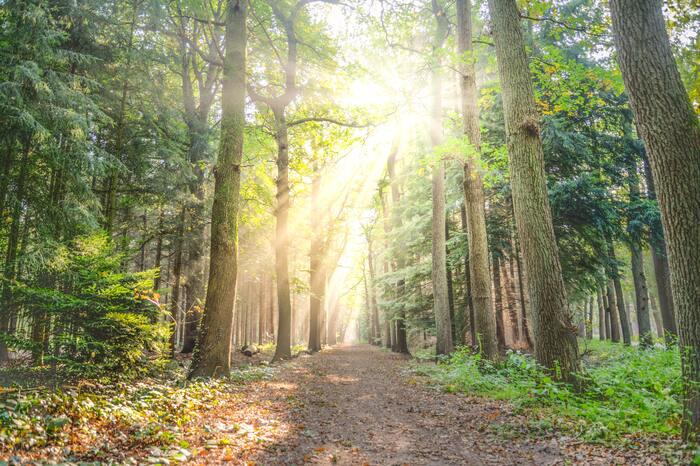 自然の中をゆっくりとお散歩してリフレッシュするのはいかがでしょう?森の中で森林浴をしながら深呼吸をして歩くと、頭の中がだんだんクリアになっていく感覚を味わえますよ。