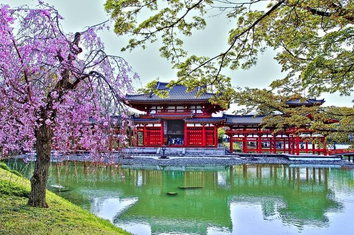 平等院では四季折々で美しい風景を眺めることができます。毎年春になると、境内に植樹されている桜が満開となり、鳳凰堂の美しさを引き立てています。