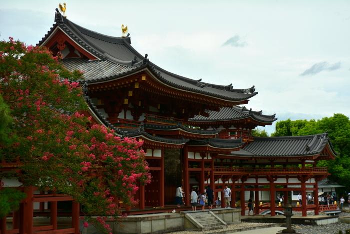 夏になると平等院と鳳凰堂は春とは異なる表情を見せてくれます。鳳凰堂の近くに植栽されている百日紅が満開になり、朱色をした鳳凰堂の美しさに華を添えています。