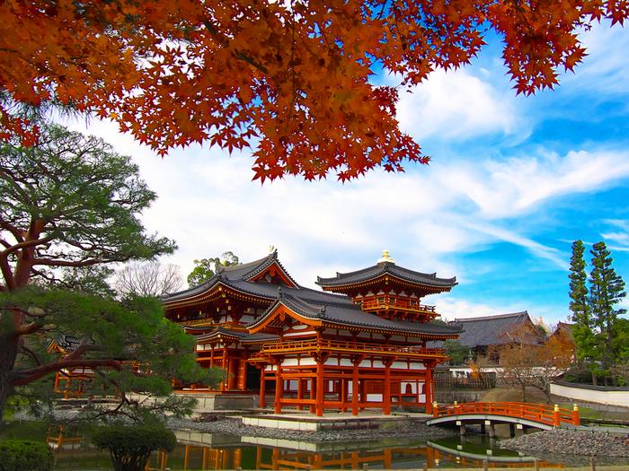 秋になると、平等院の敷地内に植樹されているモミジやカエデが艶やかに彩ります。真っ赤に染まったモミジ、抜けるような青い秋空の、優美で洗練された鳳凰堂が織りなす景色は、まるで一枚の日本画のようです。
