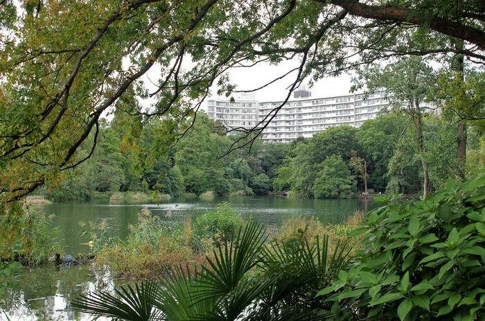 井の頭公園の大きな池越しには井の頭パークサイドマンションが。このマンションの外観を合わせた風景もとても綺麗。