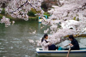 桜の名所としても有名。日本さくら名所100選にも選ばれ、桜が満開になると多くの人で賑わいます。