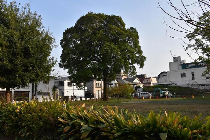 井の頭公園の近くには吉祥寺西公園があります。映画の中でみんなでピクニックを楽しんでいる場所です。ぜひ、こちらにも寄ってみてくださいね。