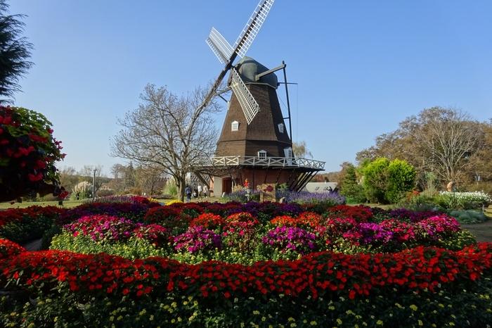 古きよきデンマークの田園風景が楽しめる「ふなばしアンデルセン公園」は、千葉県船橋にある総合公園。その広大な敷地の中でも「ワンパク王国ゾーン」は動物とのふれあいやアスレチック、プールなどで思いっきり遊び回れるエリア。