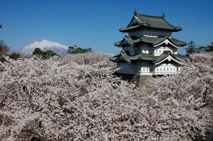 弘前城と岩木山。桜の季節にはたくさんの観光客が訪れる(写真提供:弘前市)
