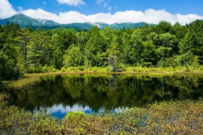 標高1590メートルに位置する牛留池は、針葉樹の森に囲まれた静かな池です。池の周囲は起伏が少なく遊歩道も整備されているので景色を楽しむだけでなく、森林浴を楽しむことができます。