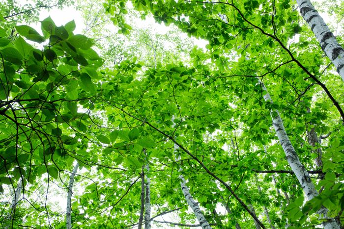 太古の森を彷彿とさせる趣を醸し出している原生林の森で散策をしながら時々空を見上げてみましょう。葉の間から射し込む木漏れ日は心地よく、身も心もリフレッシュすることができます。