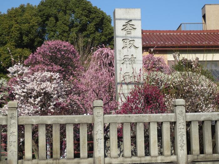 「小村井香取神社」は、区内の梅の名所として有名。創建は古く、平安時代の末期と言われています。江戸時代には境内の東側に「小村井梅園」という梅の名所がありましたが洪水により廃園し、境内に香梅園が開設されました。毎年2月になると、85種類・120本の美しい梅が咲き誇ります。