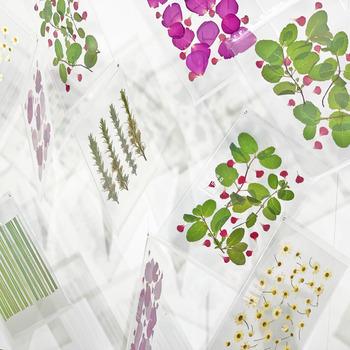 「Have a Herbal Harvest」は、アクリルボードの中に標本のようにハーブが閉じ込められた新感覚のハーブティー。お茶にして飲むだけでなく、インテリアとして空間に飾ることもできるので、2度楽しめますね♪