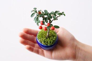 ミニ盆栽を育てるのに自信がない方はアフターサポートがあるショップで買うと◎育て方などの質問ができるので、ミニ盆栽初心者さんでも安心して育てられます。