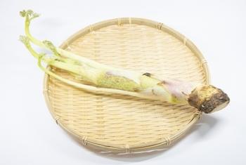 春の訪れを告げる山菜のひとつであるうどは、穂先から茎、皮まで、ほとんど捨てずに丸ごと一本をいただける素敵な食材です。  漢字では「独活」と書き、ほろ苦い風味とシャキシャキとした歯触りで、食卓の箸休めとしても人気の野菜です。