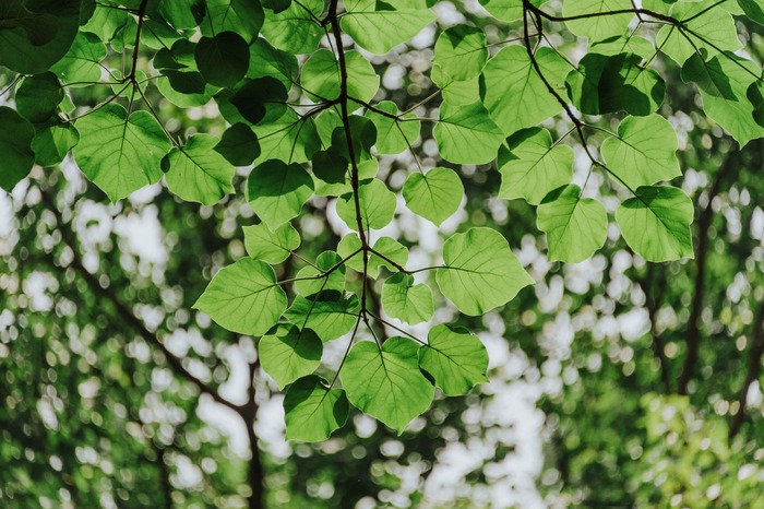 アイルランドの自然やガーデニングをたっぷりと楽しめるのが魅力。自然との共存や尊さについて改めて考えさせられる作品です。