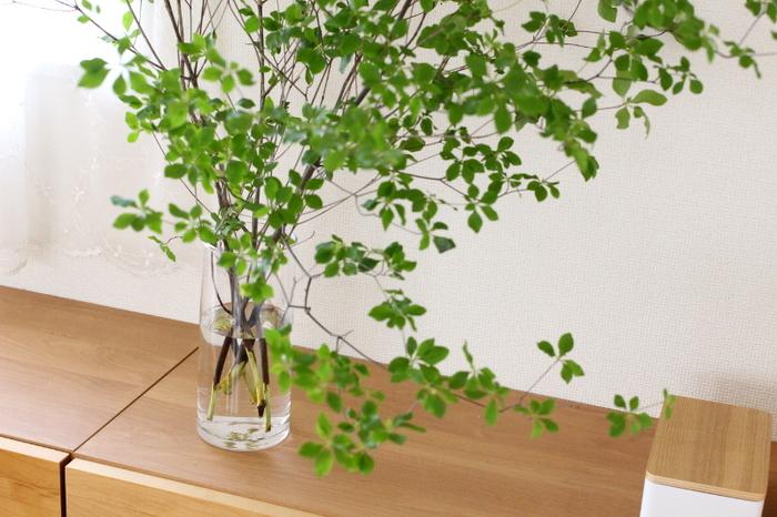 眺める楽しみ、育てる楽しみ。「インテリアグリーン」でつくる癒しの空間