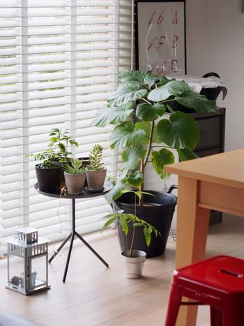 種類やサイズもさまざまなインテリアグリーンを窓辺に集めて。肩を寄せ合うように置かれたグリーンたちは、見た目も楽しいだけでなく水やりも一度にできるため、日々のお手入れがラクになります。お手入れする時間がなかなかとれない、という方も、ぜひ取り入れてほしいアイデアです。
