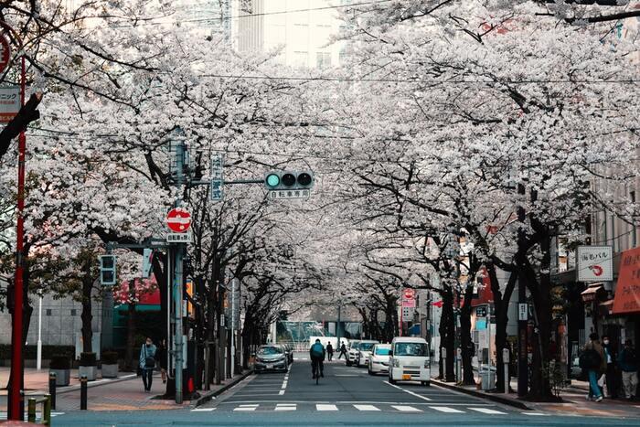 東京の大学に通うために北海道から上京してきた女子大生の不純な動機とは…。新しい環境、人との出会いを通じて東京での生活に溶け込んでいく。そして淡い恋心の行方は?