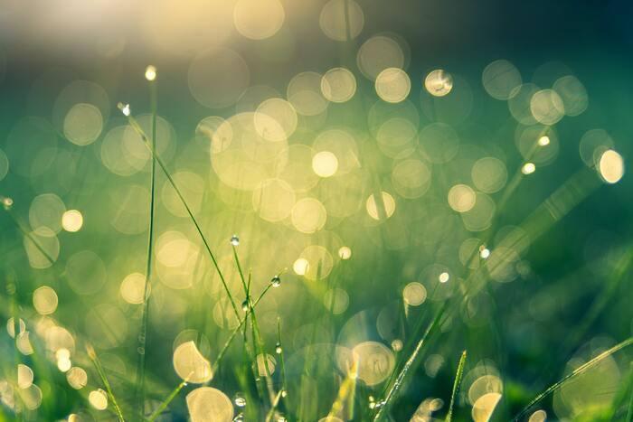 安心感や安定を表す「グリーン」。心をリラックスさせて、落ち着かせてくれる色です。 少しナーバスになってしまう日は緊張を和らげてくれる効果もあるので、穏やかに過ごしたい日に身につけると良いでしょう。