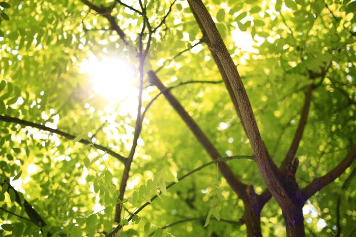 木や森の色でもあるので、自然が好きな方は、身に着けることで心地が良く過ごせそうですね。