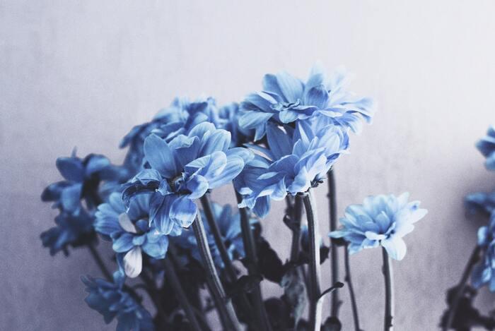 集中力を高め、鎮静作用が期待できるのがブルー。緊張をほぐしてくれる色なので、心が疲れている時に取り入れるのがおすすめです。また、誠実さをアピールできる色なのでビジネスシーンにもぴったり。