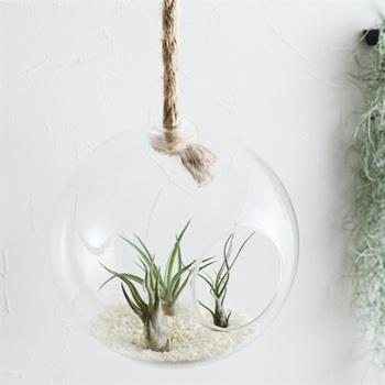 ガラスの器に植物を入れて楽しむテラリウム。置いて飾ることが多いですが、ハンギングにすると浮遊感が楽しめます。ガラスの透明感が涼し気♪多肉植物やエアプランツはお世話もラクなのでおすすめです。