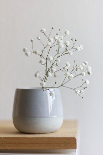 4月の花:かすみ草