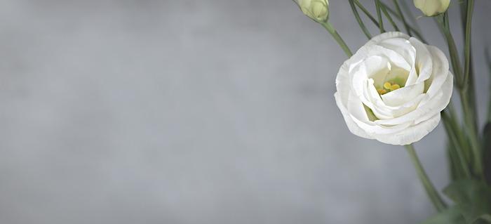 7月の花:トルコキキョウ