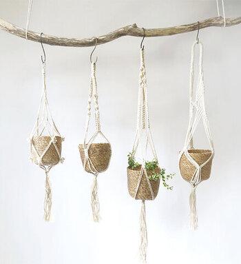 コットンロープは4種類の編み方があり、同じ素材でもそれぞれ違った印象に。どんな植物を飾ろうかなと楽しみになる、そんなハンギングポットです。