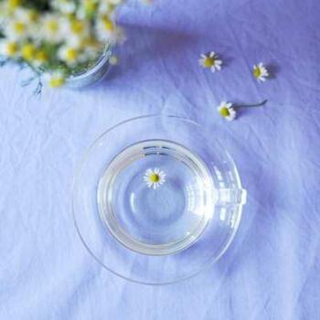 おうちでカモミールを育てていたり、無農薬のフレッシュカモミールが手に入ったら、試してみたいのが生のお花で淹れるフレッシュカモミールティーです。  お花10輪ほどに熱湯を2杯分注ぎます。ミントをアレンジすると飲みやすくなります。