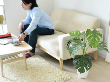 植物のお世話が大変という方は、水やりが必要ない人工観葉植物がおすすめです。こちらはモンステラがモチーフになっています。  光触媒の人工観葉植物なので、消臭や抗菌効果あり。リビングのニオイが気になるときにも重宝します。
