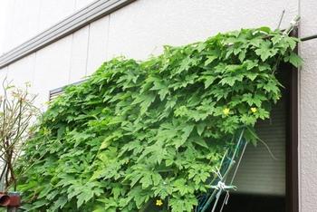 窓辺にワイヤーやネットを取り付け、植物を育てて作るグリーンカーテン。つる性の暑さに強い植物がおすすめです。ゴーヤや朝顔が一般的。見た目が美しく癒やされるだけでなく、室内の温度を下げてくれるので、省エネ効果もあります。