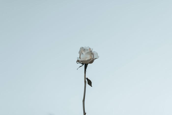 ときめきや切なさに心奪われる「大人の恋愛」を描いたおすすめ洋画作品
