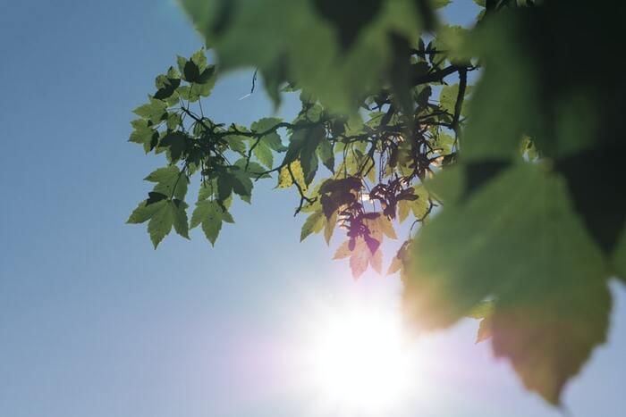 紫外線の中でも特にUVAは、お肌の奥にまで到達してハリに欠かせないコラーゲンなどの組織を破壊。首シワの原因になってしまいます。UVAは季節や天気に関わらず一年中降り注いでいるので、日頃から気をつけてあげましょう。