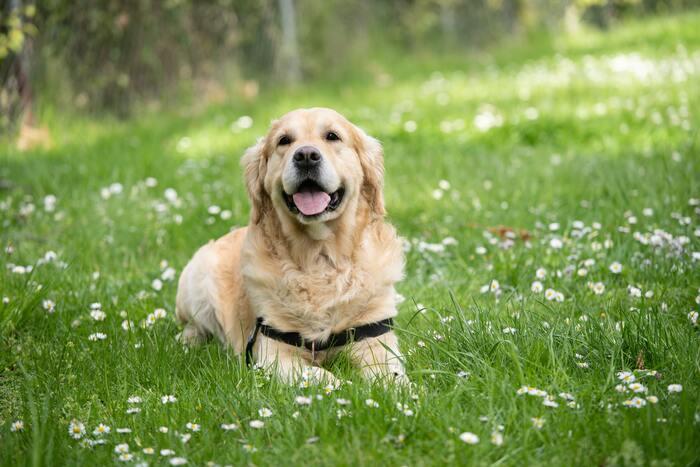 犬好きにはぜひ、観てほしい映画!わんちゃんを飼っている方なら、きっとびっくりするくらい大号泣な作品ですが、とても心があたたまります。動物からの無償の愛って本当に偉大だな、と感じます。大号泣で、翌日顔がむくむ可能性大なので、休日前の夜に観ることをおすすめします。