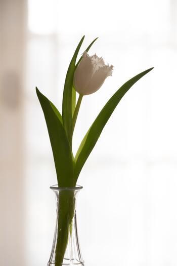 【育て方】球根を紙袋に入れ、冷蔵庫に2ヶ月ほどいれておきます。根の生える場所を傷つけないように、外側の茶色い皮をむきます。水栽培用の容器に入れ、球根の底がすこし浸るように水をいれます。根が出るまでは、暗い風通しのよい場所で管理します。1ヶ月ほど経ち根がしっかり伸びてきたら、暖かい日当たりのよい場所へ移動します。このくらいの時期から、液体肥料を使い始め、開花を待ちましょう。 【育て方のコツ】球根を選ぶときに、カビが生えていないか、ブヨブヨしてないか、傷がないかを確認しましょう。水が腐らないように、1〜3日に1回程度、こまめに水を替えましょう。根が伸びてきたら、1/2〜1/3程度浸るように水の量を調整します。液体肥料は、水に1〜2滴たらす程度で大丈夫です。花が咲いてからは、涼しい場所に移動すると長持ちしますよ。