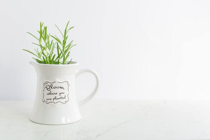 【育て方】バジルと同様に、水を含ませた水栽培用のスポンジの上に種を撒きます。毎日こまめに水を与えます。水を与えすぎると、種が窒息してしまうので、調整しながら水を与えましょう。1〜2週間程度で発芽が確認できたら、水栽培用の容器に移し替え、根の3分の2程度が水につかるように調整しましょう。 【育て方のコツ】ローズマリーはミントのように、水挿しで栽培することも可能が、発根するのに少々時間がかかります。直射日光の当たらない場所で、水は毎日こまめに変えてあげましょう。ある程度の大きさになるまでは肥料は必要ありませんが、大きく育てたい場合は液体肥料を水に与えてあげると効果的です。