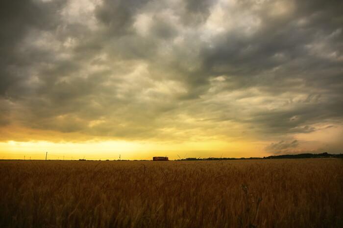 """""""穀物""""は、祭祀や伝統行事に欠かせないように、一粒一粒に神が宿るとされる、神聖なものです。米や麦、蕎麦や豆等の穀物は、命を繋ぐだけでなく、人々を繋ぎ、文化を繋いできた、日本人の暮らしに欠かせないものです。  【青森県五所川原市内に広がる麦畑(画像中央は、ストーブ列車で有名な「津軽鉄道」(津軽飯詰~毘沙門)。】"""