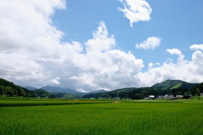"""【秋田県南部の「羽後町(うごちょう)」。""""緑と踊りと雪の町""""通り、山々に囲まれた当町は、県内屈指の豪雪地帯。あきたこまちの生産地と知られるが、蕎麦栽培も盛ん。秋田の郷土蕎麦「冷がけ蕎麦」発祥の地としても有名。】"""