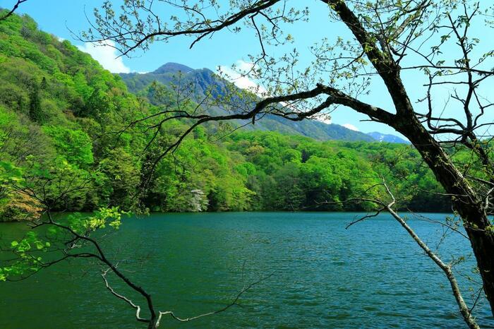 白神山地に、奥羽山脈。岩木山に、岩手山。 十和田湖に、田沢湖。奥入瀬渓流に、厳美渓。 津軽海峡に、下北半島。三陸海岸。  山塊が連なり、地形の変化に富んだ、青森、岩手、秋田の「北東北」。   【「十二湖」は、青森県南西部(白神山地の緩衝地域内)の標高150~250mの台地に点在する33湖沼群の総称。神秘的なインクブルーの「青池」が有名だが、他に「沸壷の池」や「王池」等がある。画像もその一つ「鶏頭場(けとば)の池」(5月初旬撮影)。新緑の頃も魅力的だが、紅葉時(例年10月中~下旬頃)も見事な景観となる】